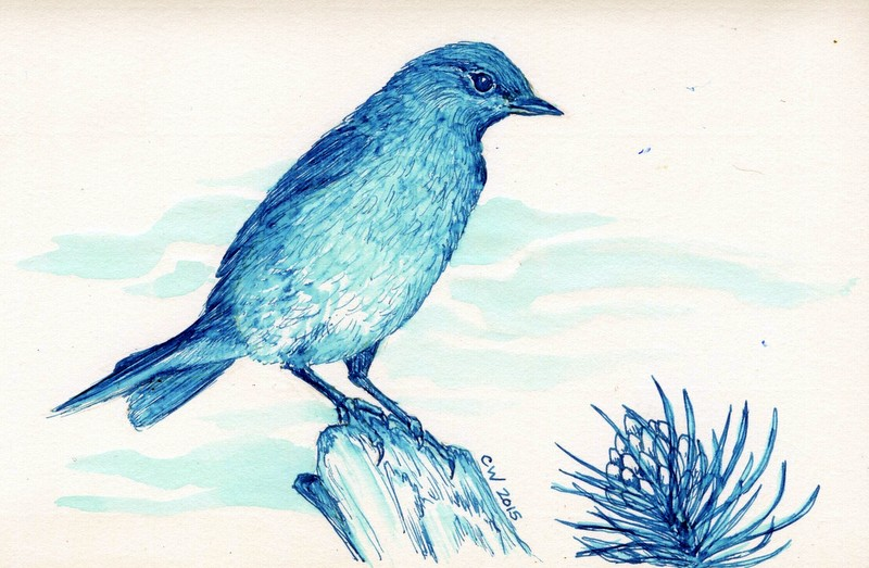 Mountain Bluebird drawn with J. Herbin Bleu Pervenche Ink
