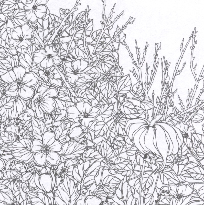 Clairefontaine Coloring Book - part of a detailed drawing